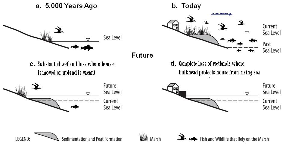 Evolution of the Marsh  Graphic, which is described in the following caption